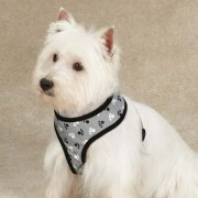 casual-canine-pawprint-harness